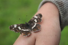Butterfly standing on hand Royalty Free Stock Photo