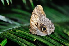 Butterfly standing on leaf Royalty Free Stock Photography