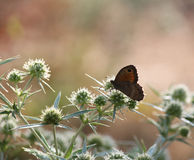 Butterfly standing on the plant Stock Photos