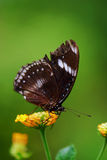 Butterfly. Stay on a flow Royalty Free Stock Images