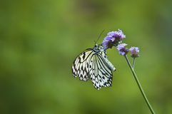 Butterfly on stem Royalty Free Stock Images