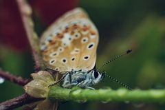 Butterfly on a stem of a plant royalty free stock image