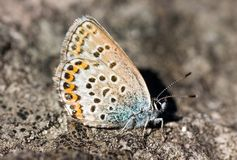 The butterfly on a stone Royalty Free Stock Photo