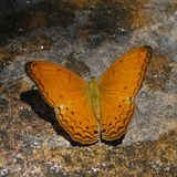Butterfly. Stone of Butterfly Stock Image