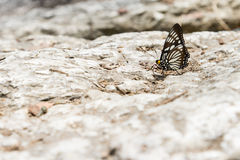 Butterfly on stone Stock Images