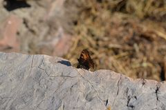 Butterfly and stone Royalty Free Stock Images