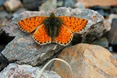 Butterfly on stone Stock Image