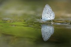 Butterfly stopped at the wet ground water Stock Photo