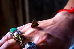 The butterfly stops flying at his hands royalty free stock photography
