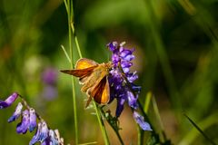 Butterfly on plant in summer sun. Butterfly on straw in summer sun stock photography