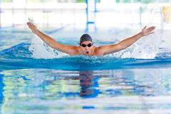 The butterfly stroke in indoor pool Stock Photography