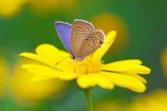 Butterfly sucking honey stock photos
