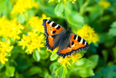 Butterfly in the summer. Butterfly and some blur in the background Stock Photos