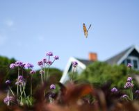 Flight at Summer Cottage royalty free stock images