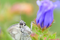 Butterfly on summer flower Stock Photography