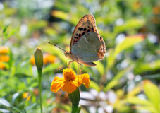 Butterfly. Summer butterfly on a flower on a sunny day Royalty Free Stock Images