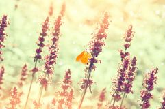 Butterfly on summer meadow Royalty Free Stock Photos