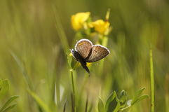 Butterfly on a summer meadow. Sunny day in the countryside stock photography