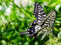 The butterfly. Summer stay on the ornaments of a very beautiful Chinese brake adjustment Stock Photo