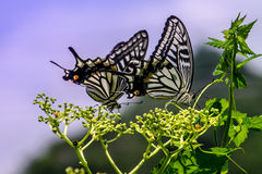 The butterfly. Summer stay on the ornaments of a very beautiful Chinese brake adjustment Stock Photos