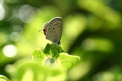 Butterfly in the Sun. Butterfly in the field and in the sun royalty free stock photo