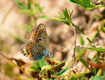 Butterfly sun bathing Royalty Free Stock Images