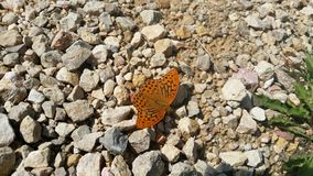 Butterfly in the sun. Orange Butterfly on Rocky ground in the sun royalty free stock photos