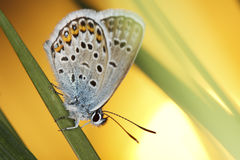 Butterfly and sun Royalty Free Stock Images