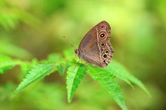Butterfly Sunbathing Royalty Free Stock Photography