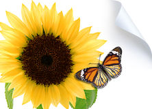 Butterfly on the sunflower Stock Images