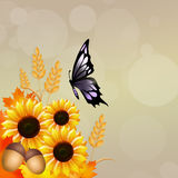 Butterfly on sunflowers Stock Images