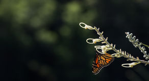 Butterfly in the sunlight Royalty Free Stock Images