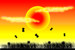 Butterfly at sunset background. Butterfly and silhouette grass at sunset background Stock Images