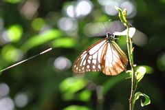 Butterfly and sunshine Royalty Free Stock Photo