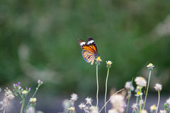 Butterfly and sunshine Stock Photos