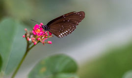 Butterfly super sharp Royalty Free Stock Photography