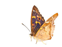 Butterfly swallowtail Stock Image