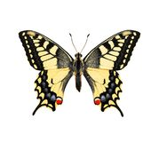 Butterfly. Swallowtail. Butterfly, isolated on white background. Swallowtail. (Papilio machaon Stock Photo