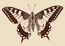 Butterfly Swallowtail (Papilio machaon). Drawn vector llustration Royalty Free Stock Images