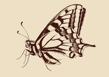 Butterfly Swallowtail (Papilio machaon). Drawn vector llustration Royalty Free Stock Photography