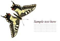 Butterfly Swallowtail. Papilio machaon Lepidoptera: Papilionidae. Isolated on a white background royalty free stock photo