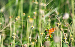 Butterfly swarm flower Royalty Free Stock Photos