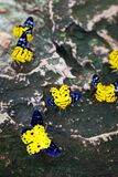Butterfly swarm that have yellow and blue color on wings standing on the stones or rocks focus at bottom butterfly of frame.