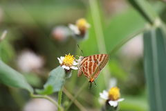 Butterfly. Is swarming , grass flower , suck pollen Stock Images