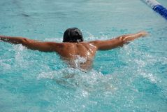 Butterfly swimmer. Powering ahead in 50m race Royalty Free Stock Photography