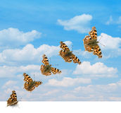 Butterfly takeoff. Several positions of butterfly takeoff in sky Stock Photos