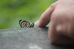 Butterfly. A butterfly taking a break, chatting to someone´s hand Royalty Free Stock Photos