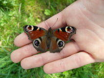 Butterfly. A butterfly taking a break on someone´s hand Royalty Free Stock Image
