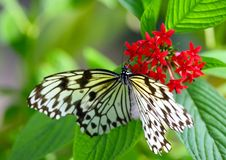 Butterfly taking meal on flower royalty free stock image
