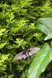 Butterfly taking a nap Stock Photography
